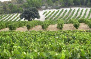 Vinos De madrid - vinmarker omkring Madrid