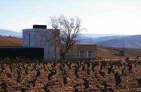 vingården Finca Losada overfor Castro de la Ventosa.
