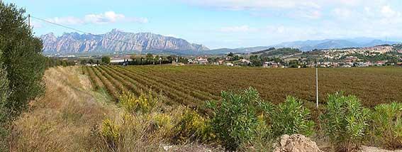 gode betingelser for produktion af store vine