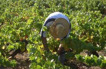 forbedringer i vinmarkerne