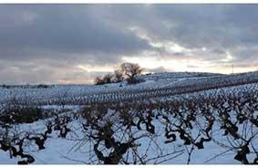Vinmarker i vintertiden